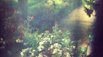 Monet intime, photographies de Bernard Plossu