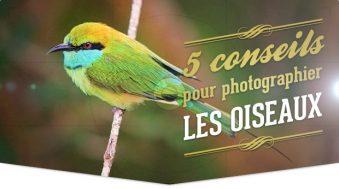 5 conseils pour photographier les oiseaux