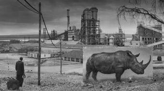 Quand la photographie animalière s'engage pour la sauvegarde des espèces